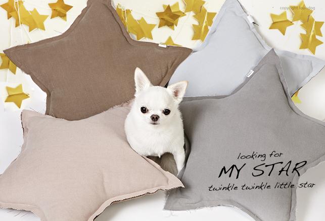 my-star-main.jpg