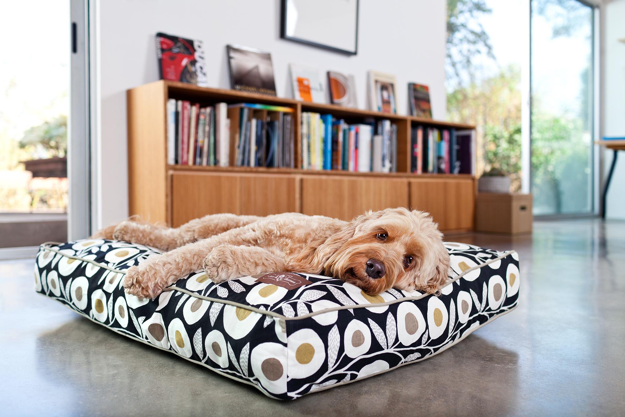 pillow-everyday-cotton-dandy-lifestyle-2-2000x1333-72dpi-rgb.jpg