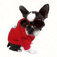 Doggles Eye Protection for Dogs
