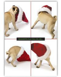 Pugs Holiday Card Set