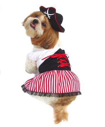 Lady Pirate Dog Costume