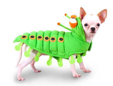 Green Caterpillar Dog Costume