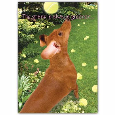 Greener Under A Wiener Card