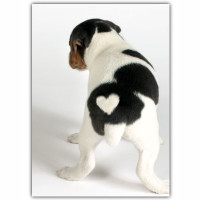 Heart Puppy Blank Card