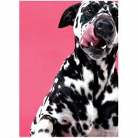 Dalmatian Love Card