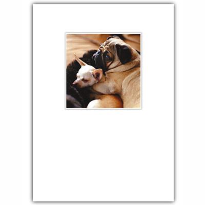 Pug & Chihuahua Love Card