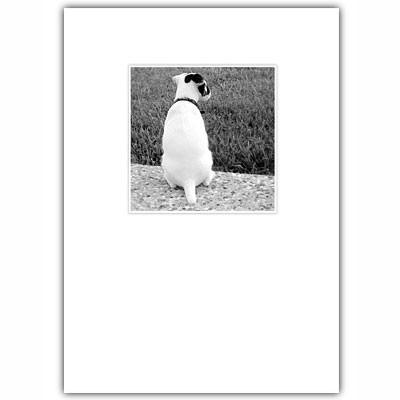 Jack Russell Condolences Card