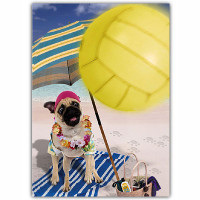 Pug Volleyball Birthday Card