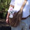 Susan Lanci Luxe Suede Cuddle Carrier