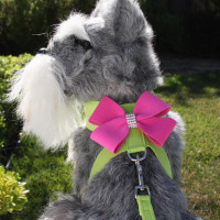 Susan Lanci Two Tone Nouveau Bow Tinkie Harness