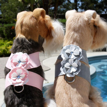 Susan Lanci Special Occasion Tinkie Harness