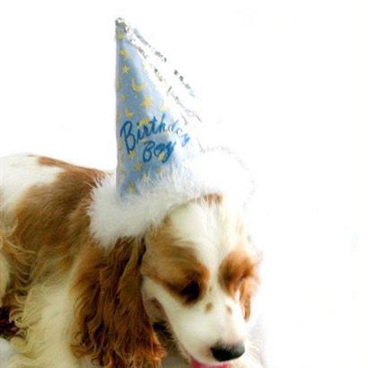 Birthday Boy Dog Hat