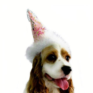 Birthday Girl Dog Hat