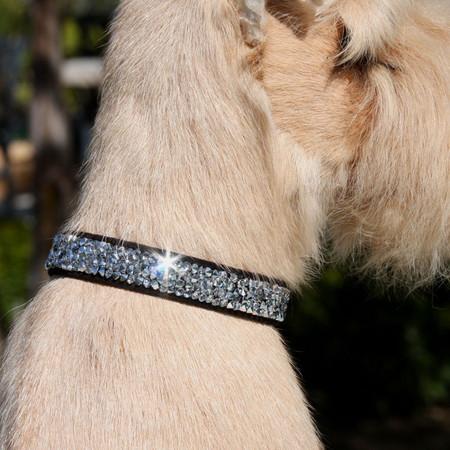 Susan Lanci Crystal Rocks Ultrasuede Collar