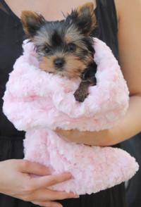 Rosebud Snuggle Pups