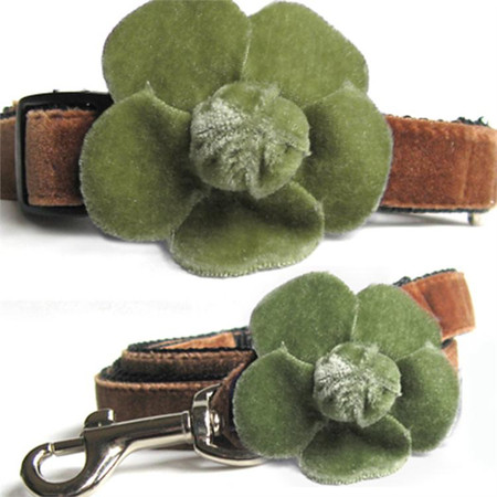 Camellia Olive Collar & Lead