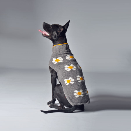 Daisy Dog Sweater