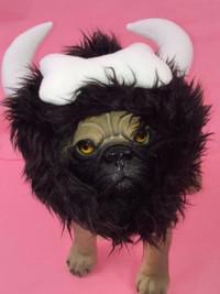 Viking Pet Hair