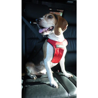 Sleepypod Clickit Sport Utility Dog Harness
