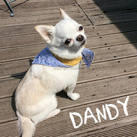 Louisdog Dandy Scarf