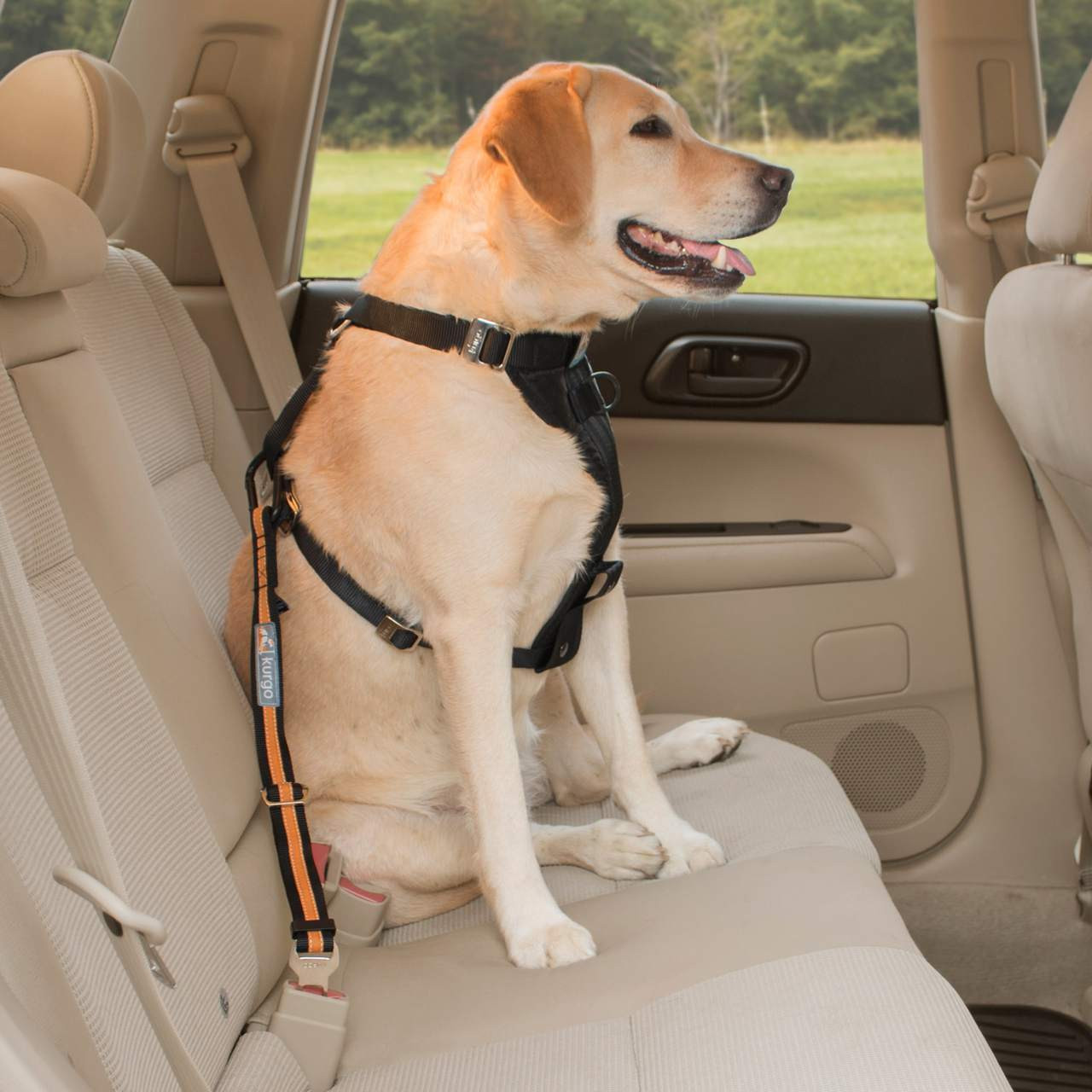 Dog Seat Belt Harness >> Direct To Seat Belt Tether