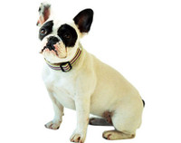 Chic Stripe Collar & Lead