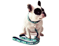 Picadilly Spots Collar & Lead
