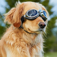 Doggles Sidecar Goggles