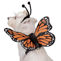 Butterfly Glow Wings Harness Costume