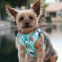 Wrap and Snap Choke Free Dog Harness