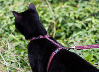 Kitty Harness