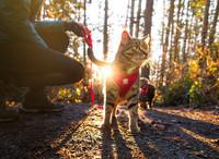 Adventure Kitty Harness