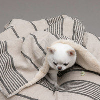 Louisdog Stripes Linen Blanket