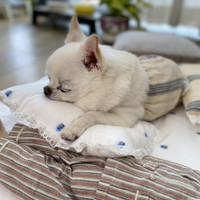 Louisdog Summer Dream Pillow