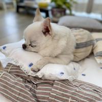 Louisdog Summer Dream Pillow