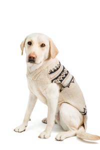 Alpaca Cream Wyatt Dog Sweater