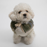 Louisdog Gorgeous Cape n Collar