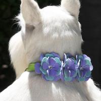 Susan Lanci Emma Flower Collar