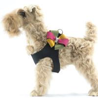 Susan Lanci Autumn Pinwheel Step In Harness