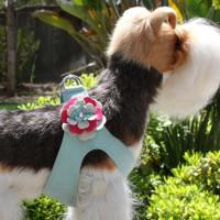 Susan Lanci Blossom Flower Step In Harness
