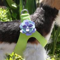 Kiwi color Harness