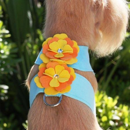 Sunshine/Tangerine Flower on Tiffi Blue Harness
