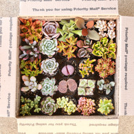 (25) Pcs. * CLEARANCE*2.5 inch Assorted Succulent Box