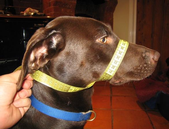 measuring-your-dog-2.jpeg