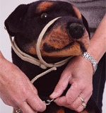 step3-k9-bridle-fitting-instructions.jpg