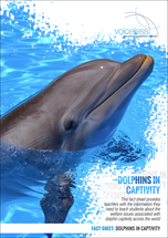 Dolphins in Captivity - Worksheets