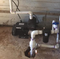 Grundfos CM Booster 3-5 On Demand Pump - Installed in a pump house