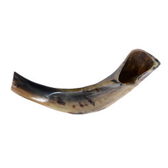FULL POLISHED DARK RAM HORN KOSHER SHOFAR