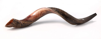 Shofar  Half Polished & Half Natural Kudu Horn Yemenite from Israel