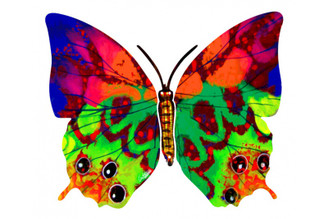 Hava Butterfly ( Wall Hanging ) By David Gerstein